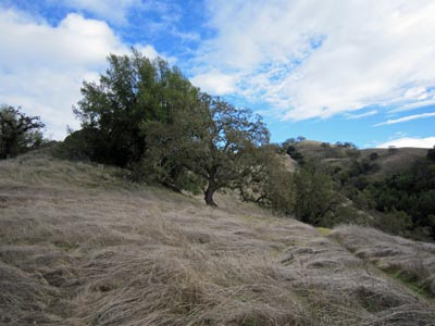 Henry W. Coe State Park on 05 December 2010